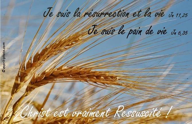 'le_pain_de_vie'