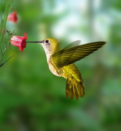 oiseau du ciel