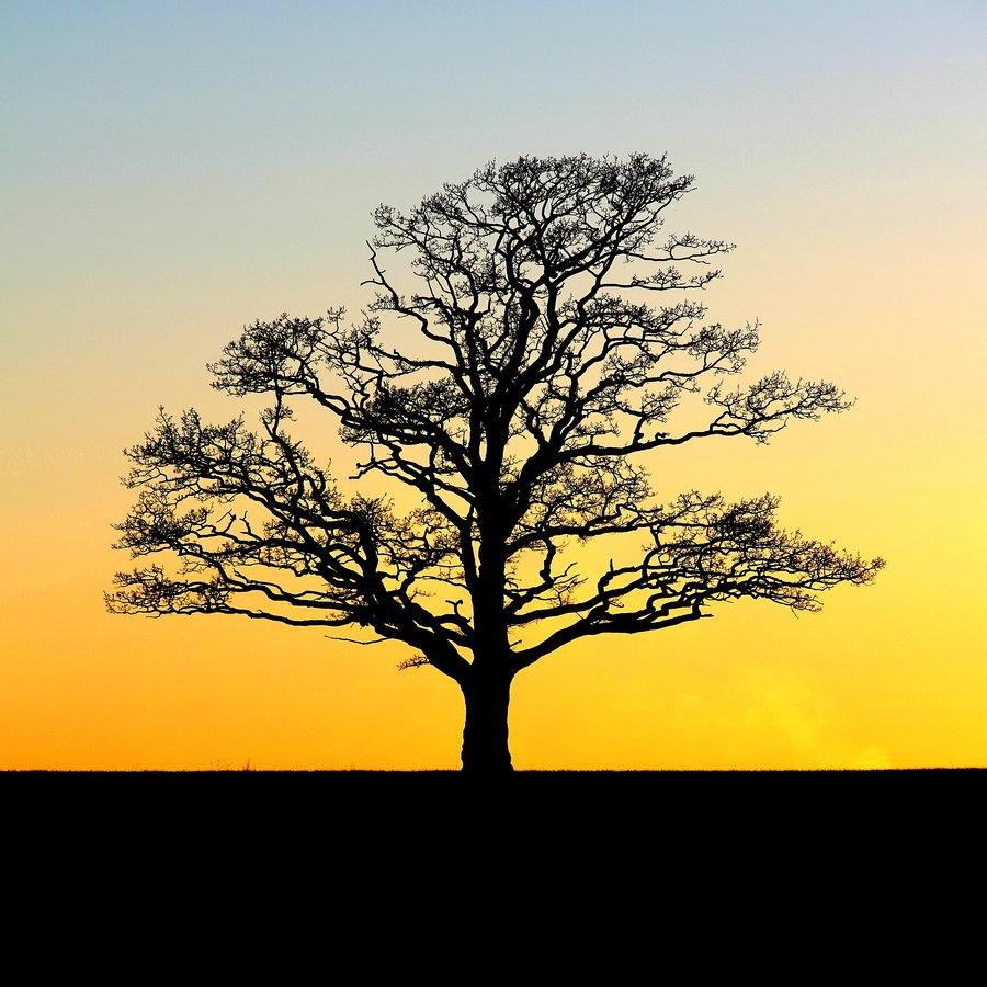 arbre_d__or_by_nightwibe-d32cwn6
