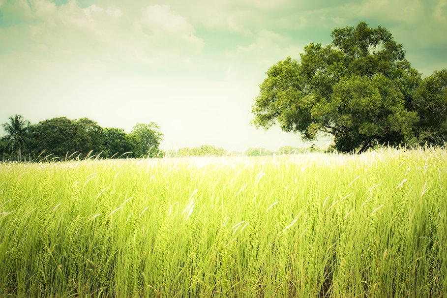 205991__nature-summer-summer-grass_p