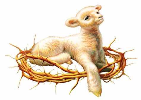agneau-couronne