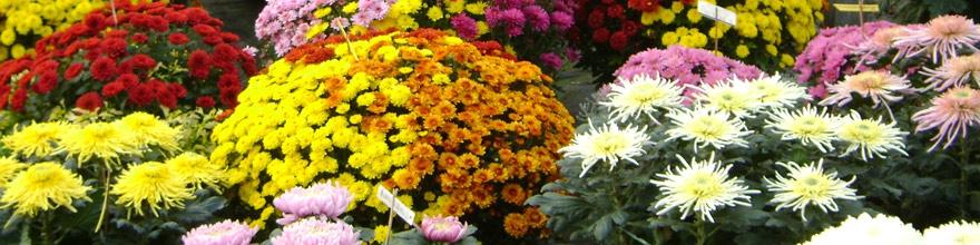 fleurs-toussaint-000