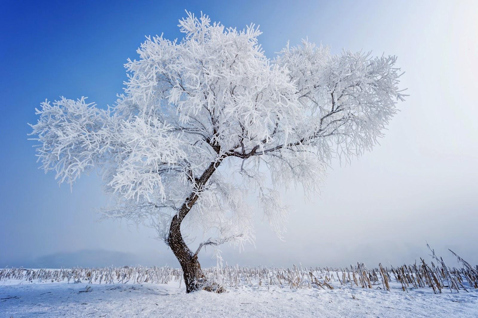518192_derevo_zima_priroda_sneg_5600x3726_www-gdefon-ru