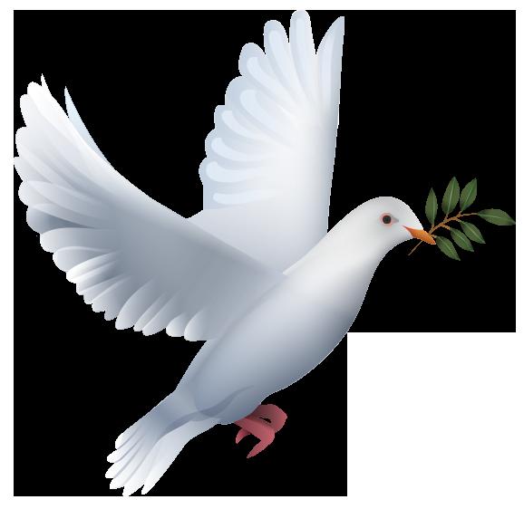 colombe-slider