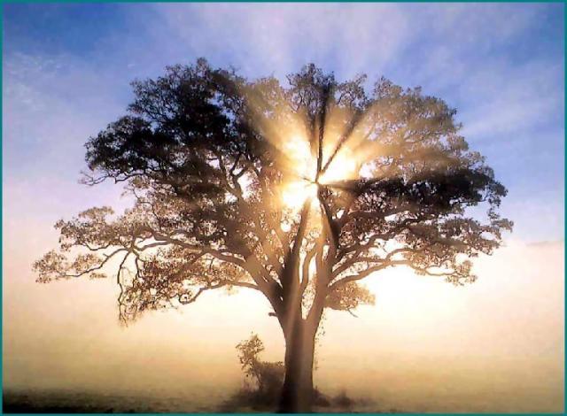 arbre-soleil